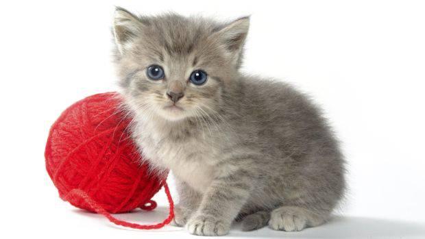 O gato que vive em nós